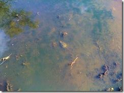 sd_turtle